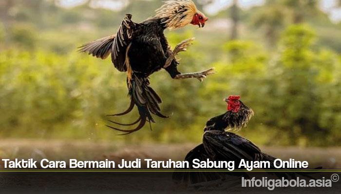 Taktik Cara Bermain Judi Taruhan Sabung Ayam Online